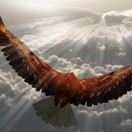 soaring_eagle_webinar